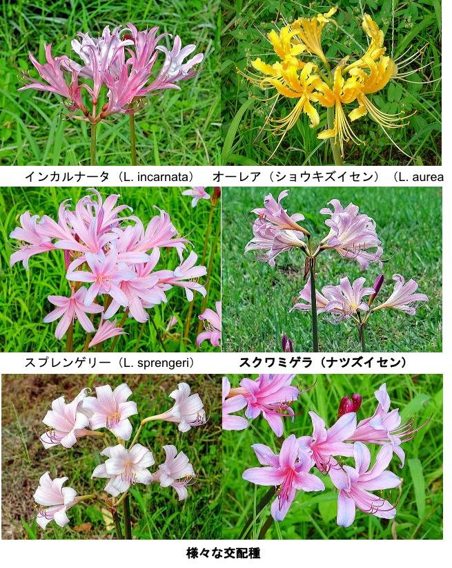 f:id:yachikusakusaki:20200921224542j:plain