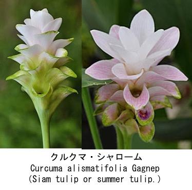 f:id:yachikusakusaki:20200922215339j:plain