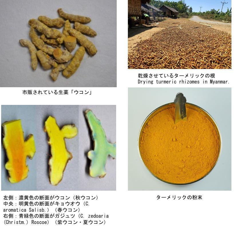 f:id:yachikusakusaki:20200922215509j:plain