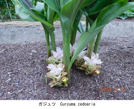 f:id:yachikusakusaki:20200922215607j:plain