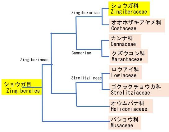 f:id:yachikusakusaki:20200922215706j:plain