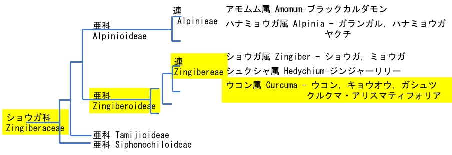 f:id:yachikusakusaki:20200922215723j:plain