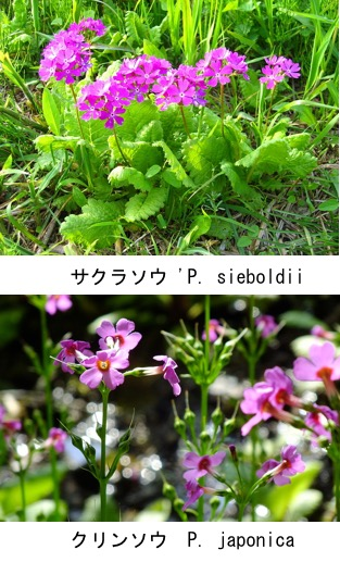 f:id:yachikusakusaki:20201004024848j:plain