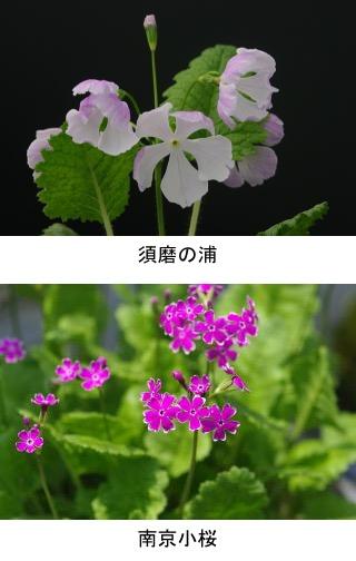 f:id:yachikusakusaki:20201004025812j:plain