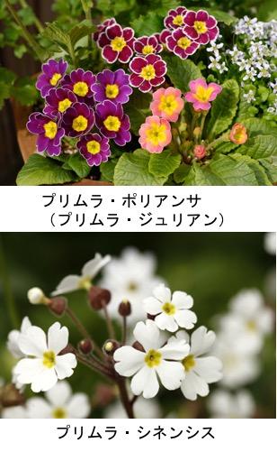 f:id:yachikusakusaki:20201004101559j:plain