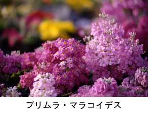 f:id:yachikusakusaki:20201004101651j:plain