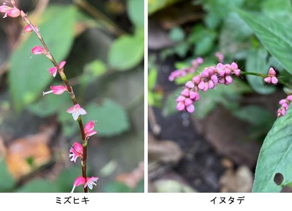 f:id:yachikusakusaki:20201006013014j:plain