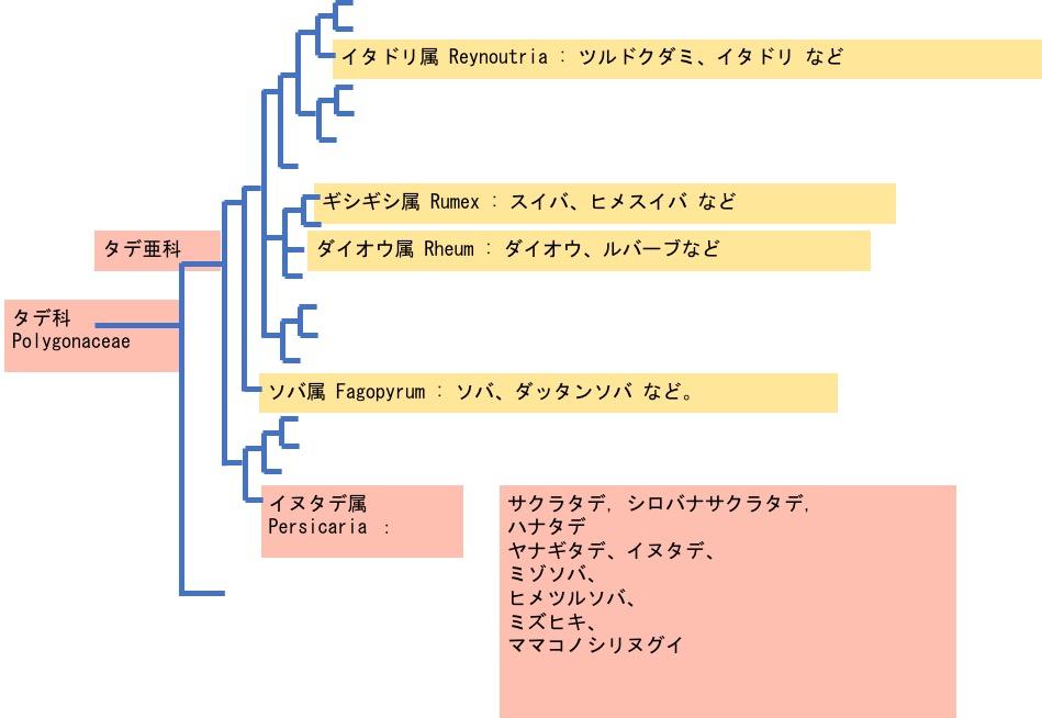 f:id:yachikusakusaki:20201006014216j:plain