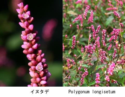 f:id:yachikusakusaki:20201007214405j:plain