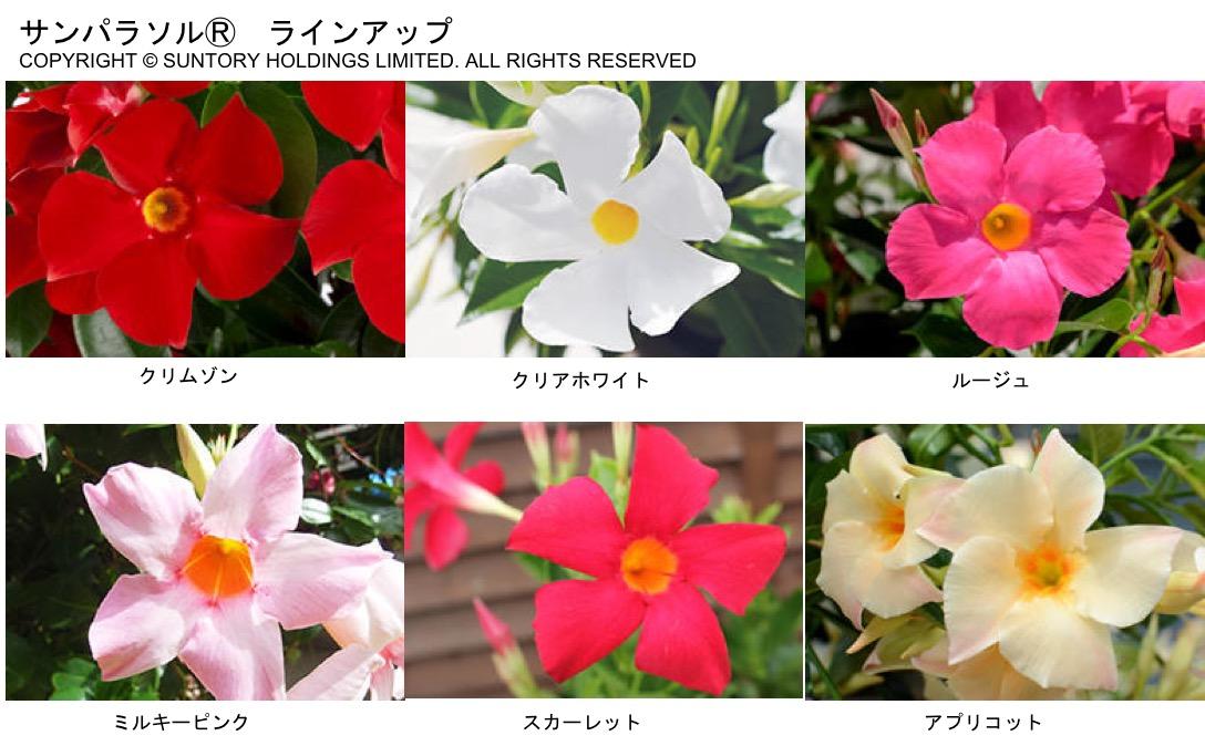 f:id:yachikusakusaki:20201023005718j:plain