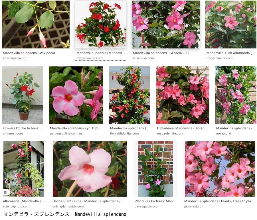 f:id:yachikusakusaki:20201023010245j:plain