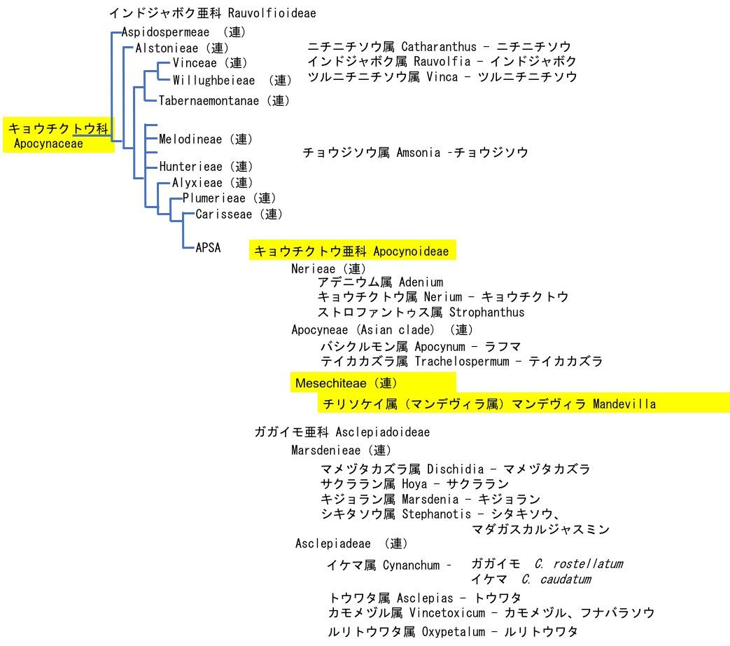 f:id:yachikusakusaki:20201023011025j:plain