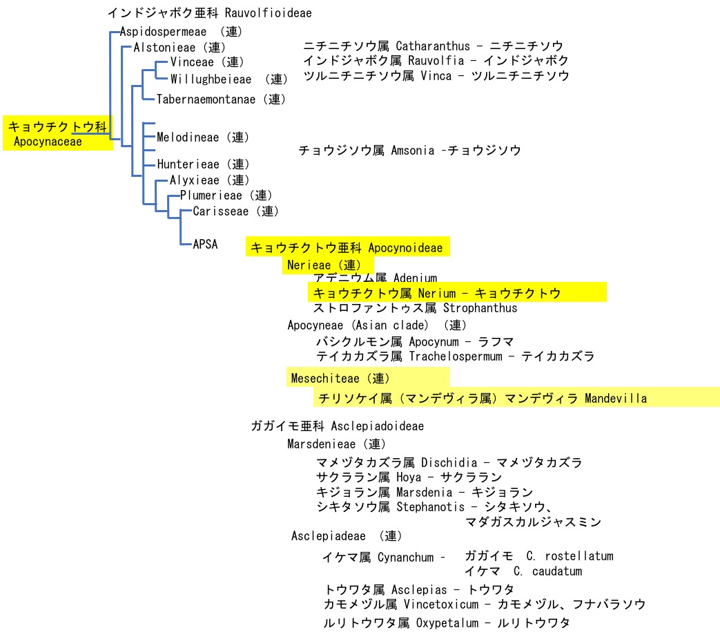 f:id:yachikusakusaki:20201024012756j:plain