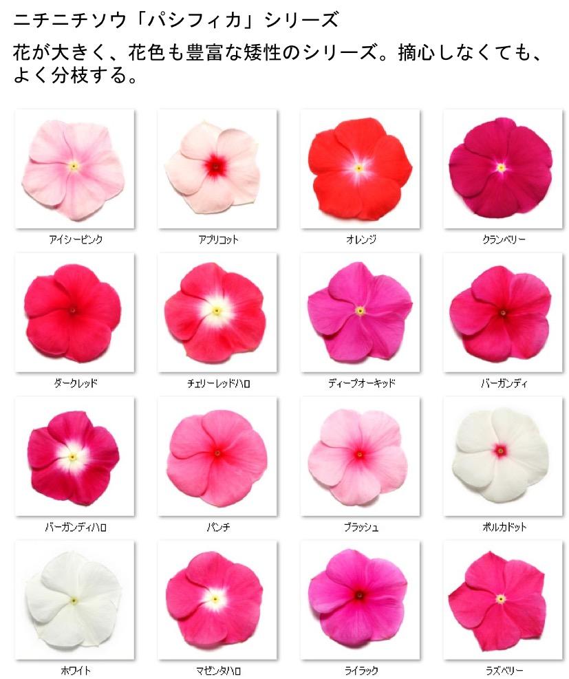 f:id:yachikusakusaki:20201025000946j:plain
