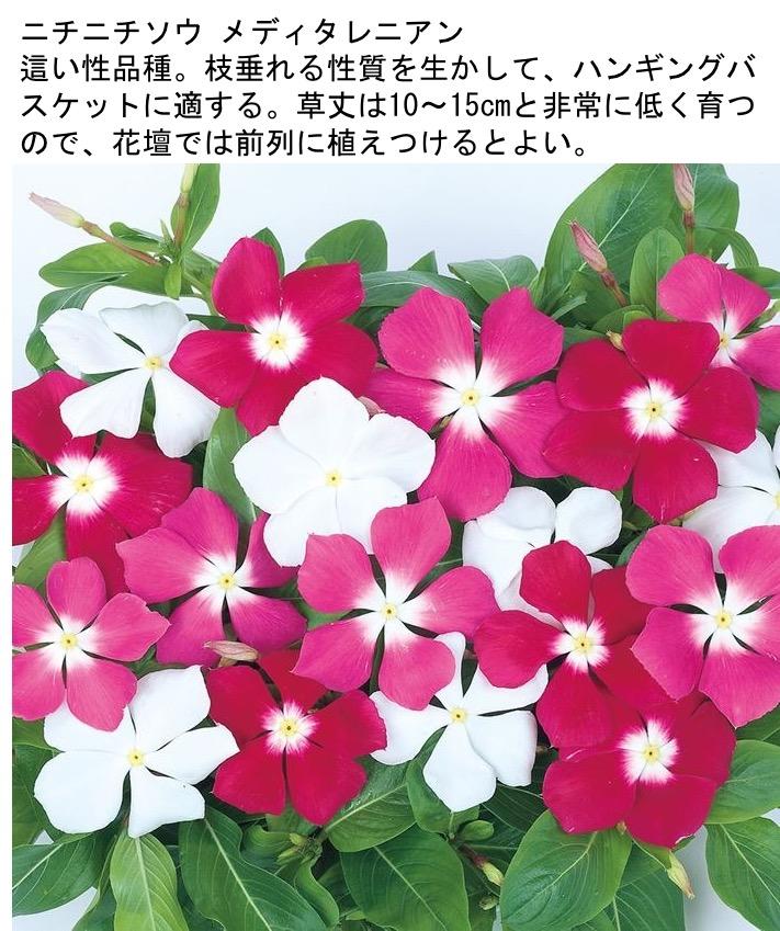 f:id:yachikusakusaki:20201025001127j:plain