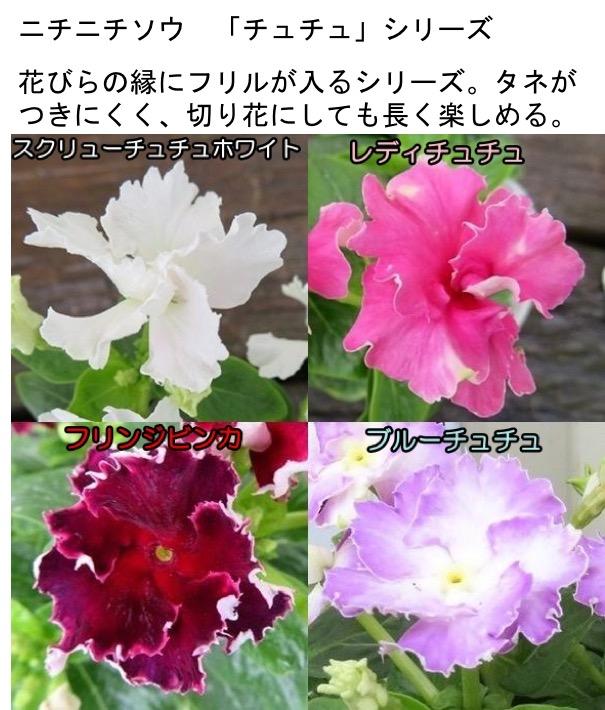 f:id:yachikusakusaki:20201025001245j:plain