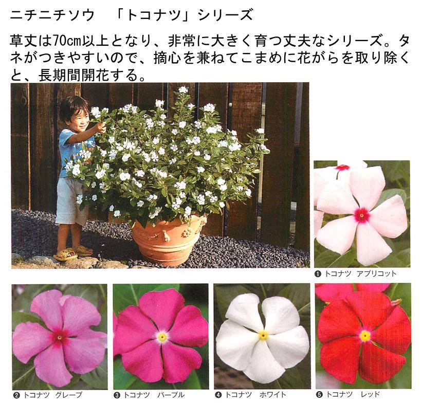 f:id:yachikusakusaki:20201025001534j:plain