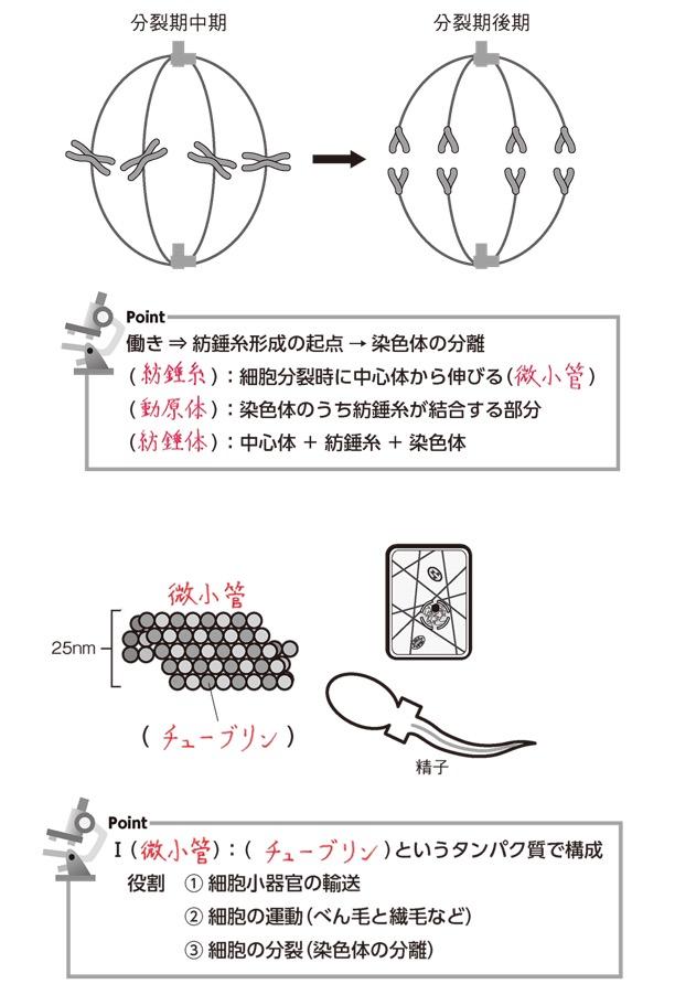 f:id:yachikusakusaki:20201025003757j:plain
