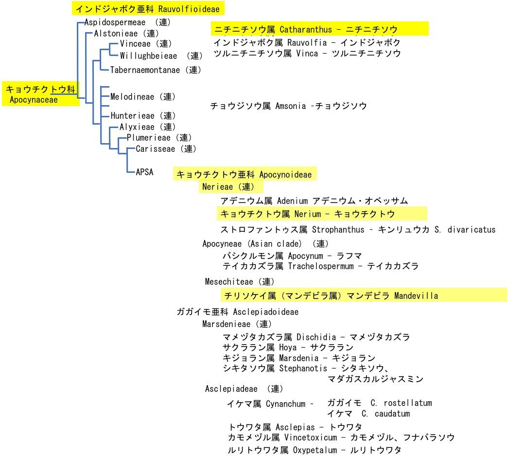 f:id:yachikusakusaki:20201025010141j:plain