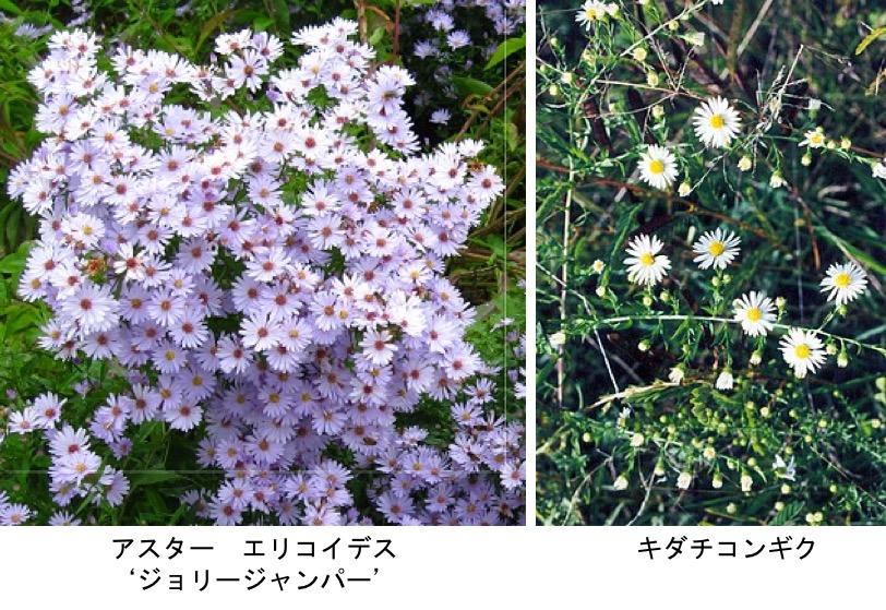 f:id:yachikusakusaki:20201027011032j:plain