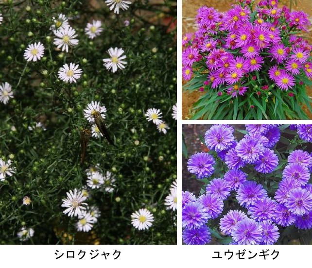 f:id:yachikusakusaki:20201027011056j:plain