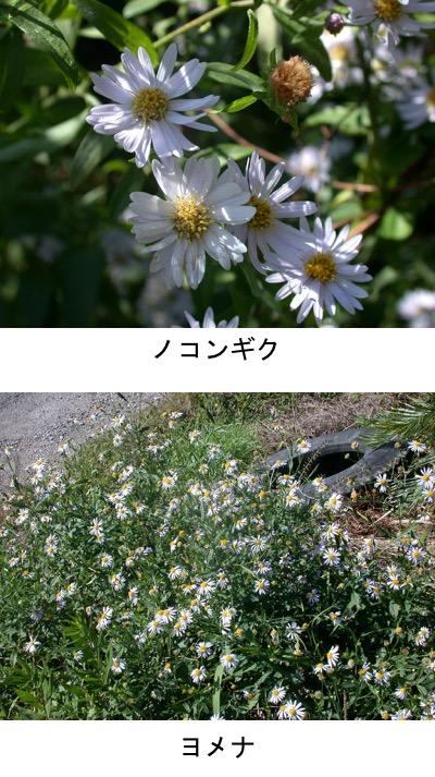 f:id:yachikusakusaki:20201027011200j:plain