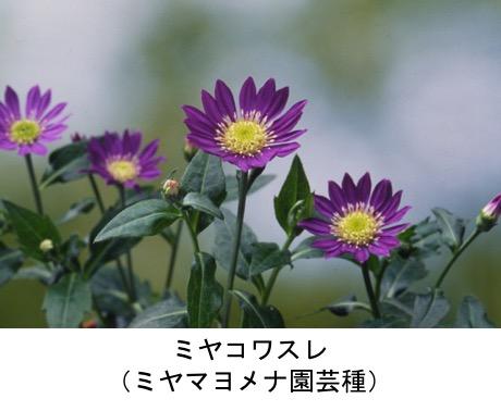 f:id:yachikusakusaki:20201027011241j:plain