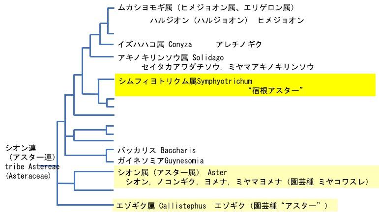 f:id:yachikusakusaki:20201027011653j:plain