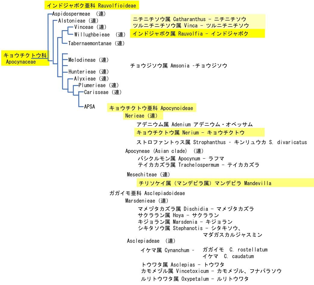 f:id:yachikusakusaki:20201030012519j:plain
