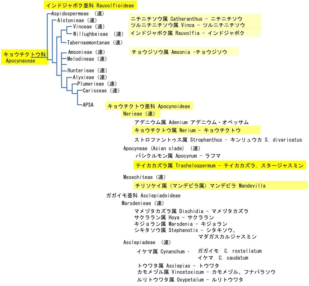 f:id:yachikusakusaki:20201101014452j:plain
