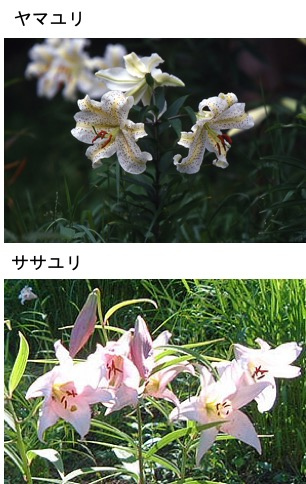 f:id:yachikusakusaki:20201105000152j:plain