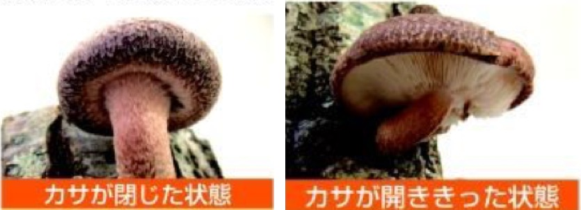 f:id:yachikusakusaki:20201108115030j:plain