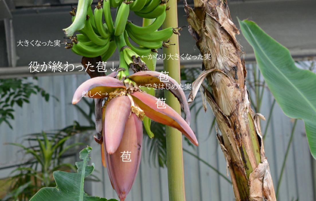 f:id:yachikusakusaki:20201121224206j:plain