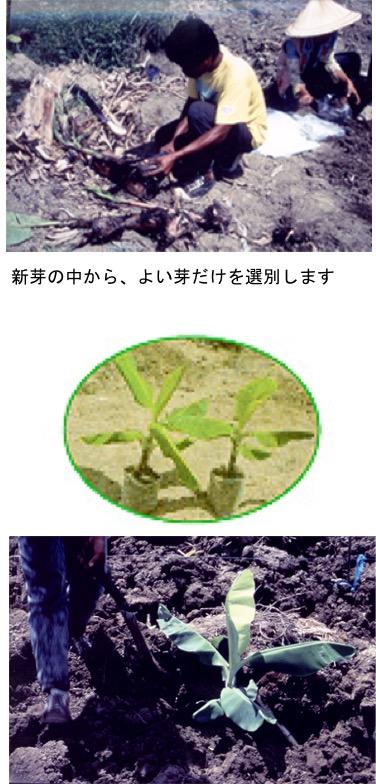 f:id:yachikusakusaki:20201121224233j:plain