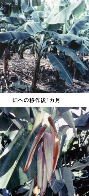 f:id:yachikusakusaki:20201121224253j:plain