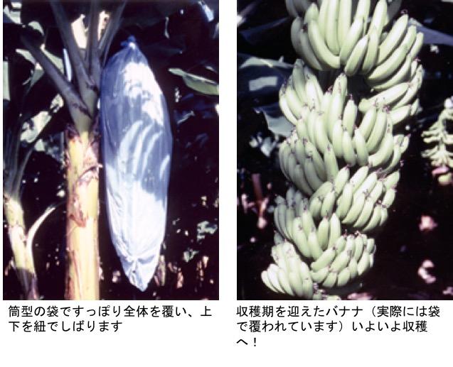 f:id:yachikusakusaki:20201121224340j:plain