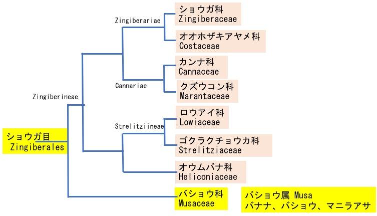 f:id:yachikusakusaki:20201123000650j:plain