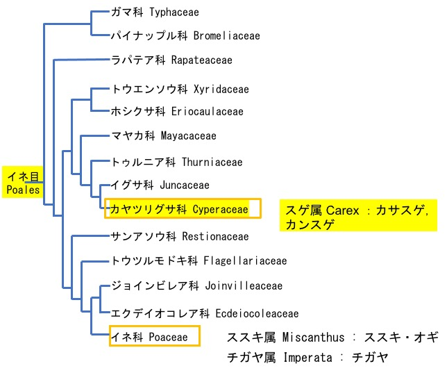 f:id:yachikusakusaki:20201129224910j:plain