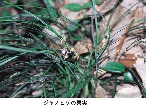 f:id:yachikusakusaki:20201201233151j:plain
