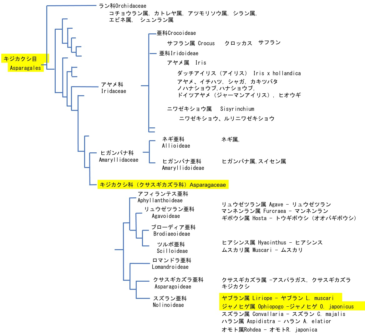 f:id:yachikusakusaki:20201204233242j:plain