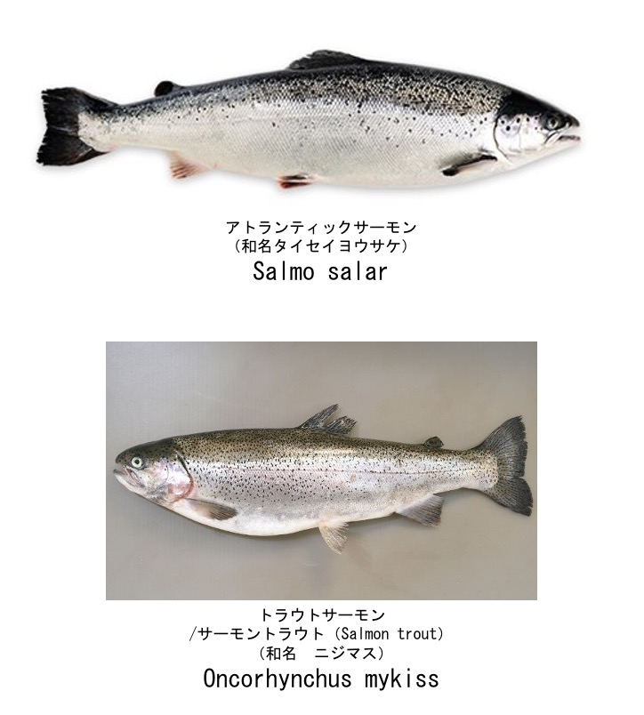 f:id:yachikusakusaki:20210103001641j:plain