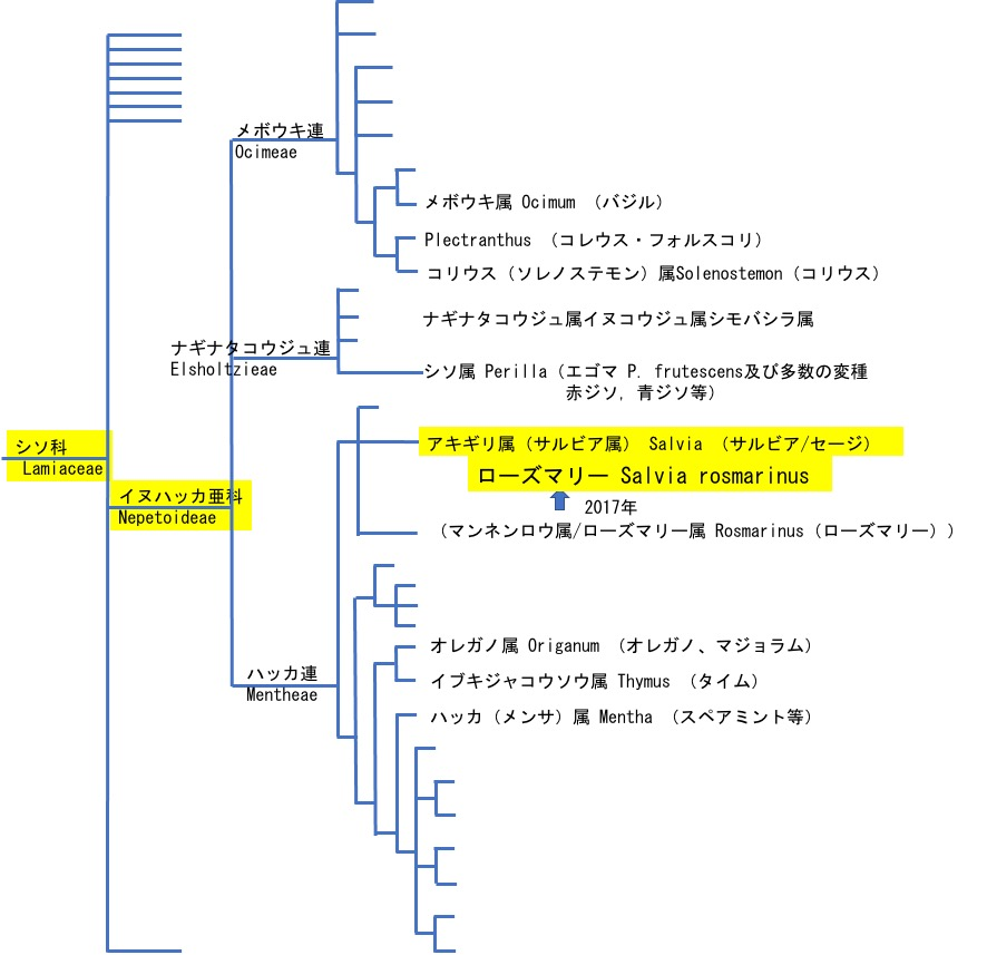 f:id:yachikusakusaki:20210202002809j:plain