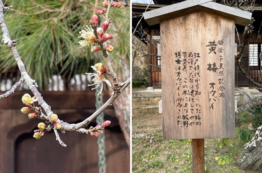 f:id:yachikusakusaki:20210212233313j:plain