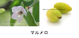 f:id:yachikusakusaki:20210220223646p:plain