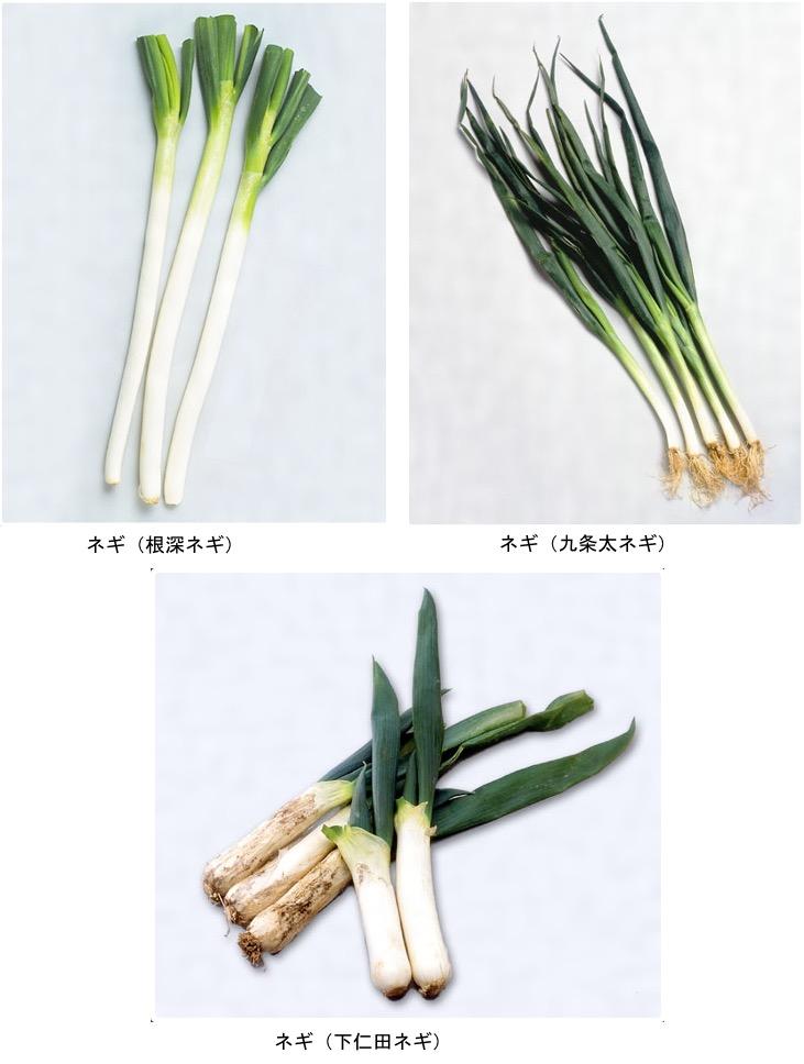 f:id:yachikusakusaki:20210222230459j:plain