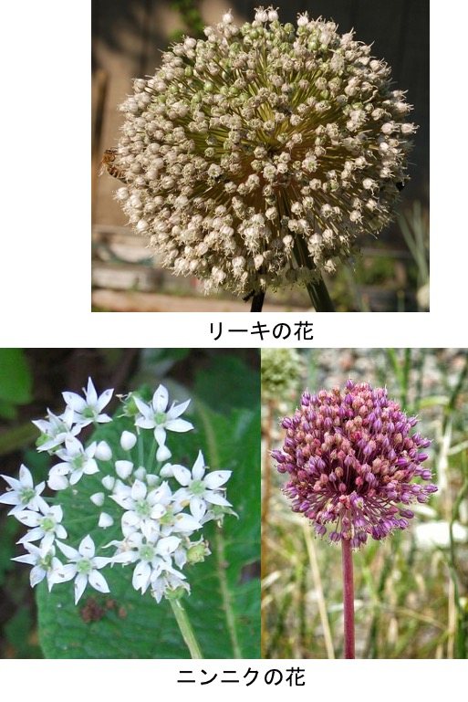 f:id:yachikusakusaki:20210226000031j:plain