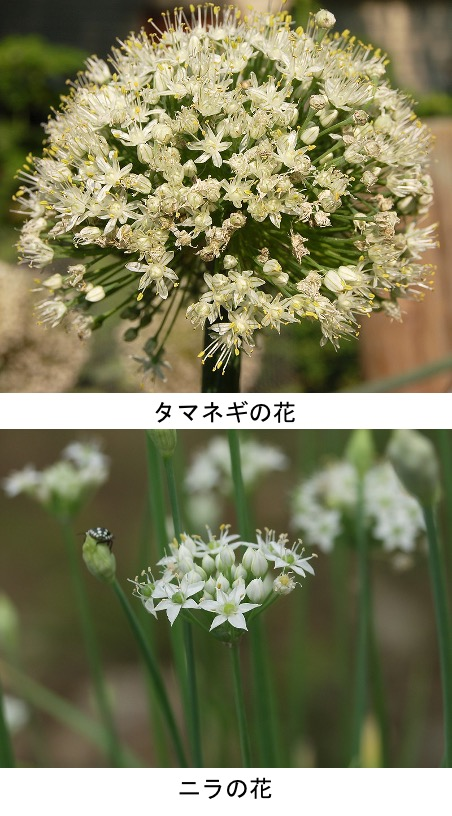 f:id:yachikusakusaki:20210226000056j:plain