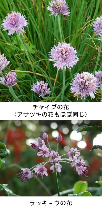 f:id:yachikusakusaki:20210226000120j:plain