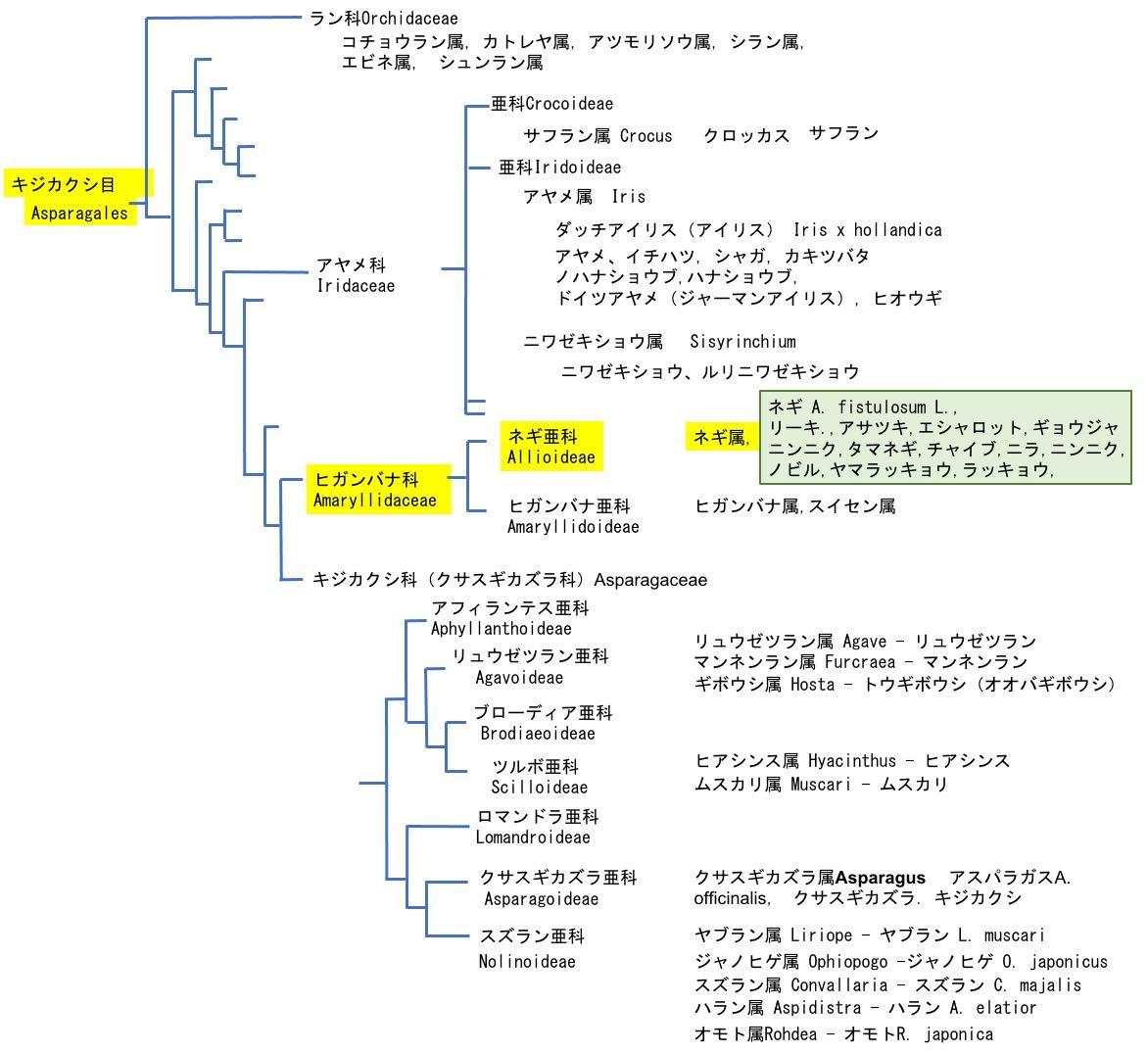 f:id:yachikusakusaki:20210226000601j:plain