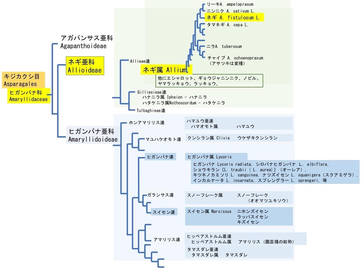 f:id:yachikusakusaki:20210226000614j:plain